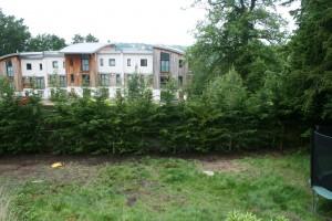 English Hedging 4-4.5m Green Leylandii planted