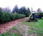 Planting of 7'-8' Laurel Hedging instant hedge